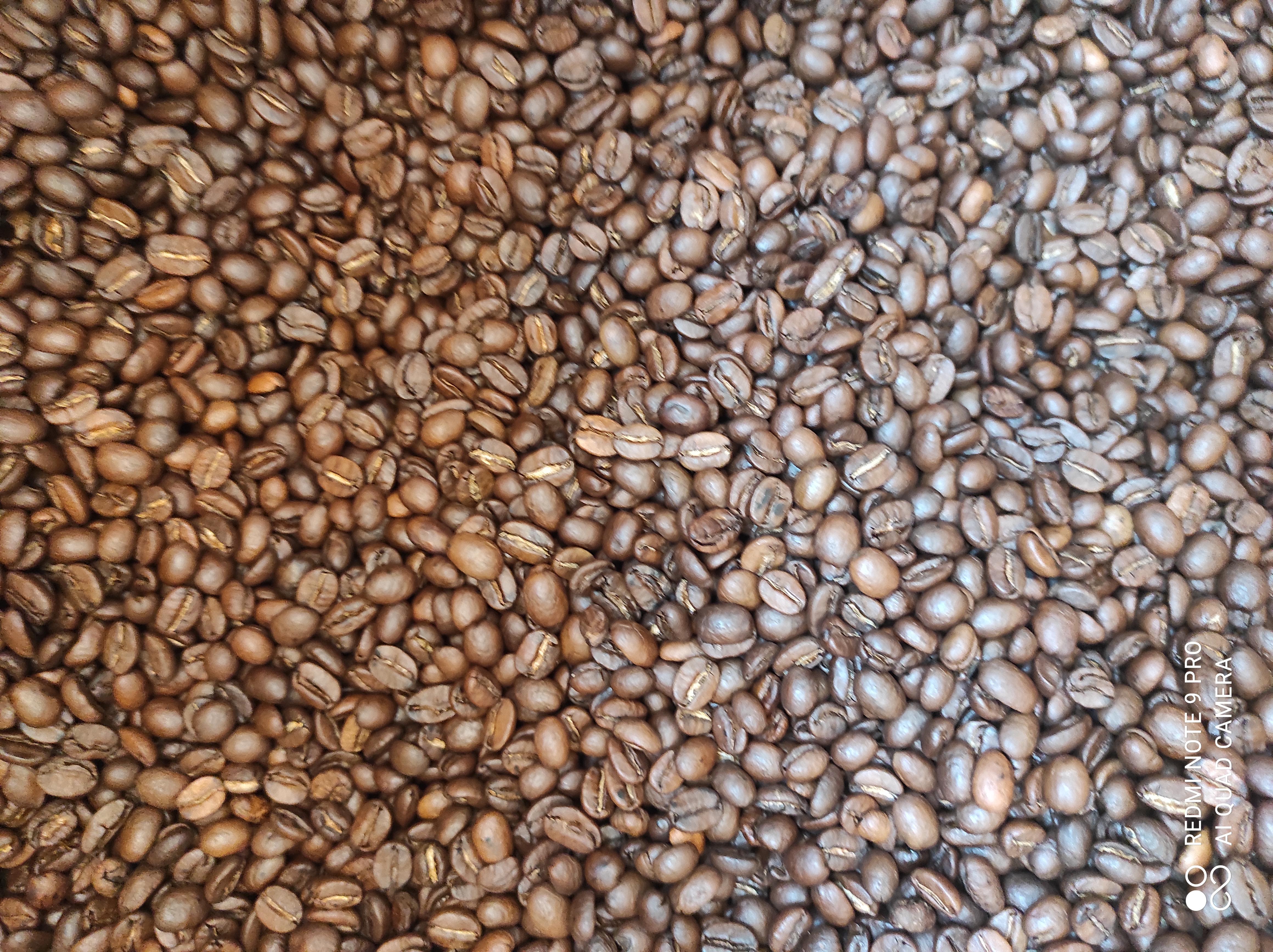 Gros plan sur le café en grains !
